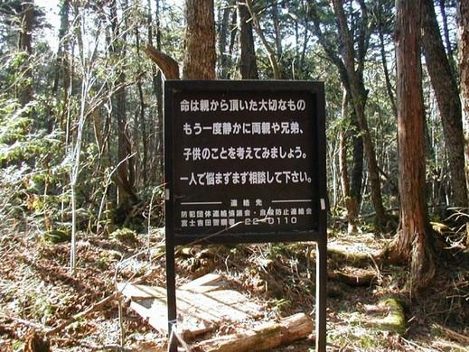How to learn Japanese with Aokigahara